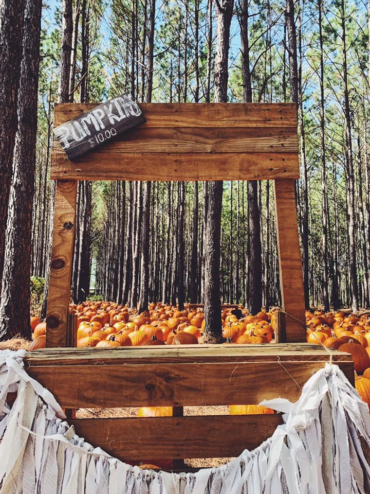 PUMPKIN PATCH PACE, FL , BURCH HOUSE, WEDDINGS FARM,